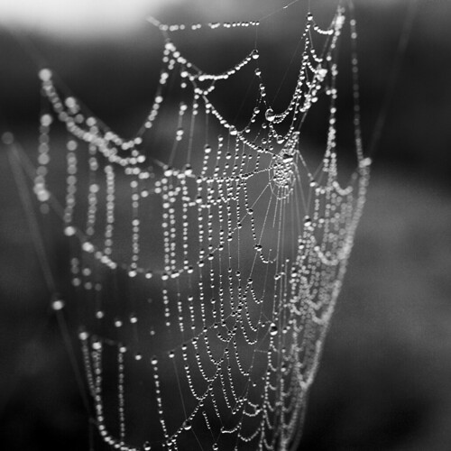 Water drops like pearls on cobweb