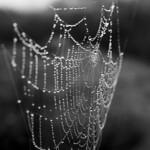 Water drops like pearls on cobweb thumbnail