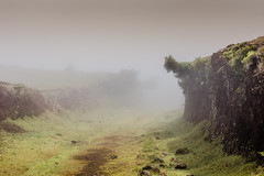 The secret Path (*Capture the Moment*) Tags: 2017 fog insel island laurel lorbeer madeira mist nebel pauldaserralowlands sonye18200mmoss sonynex7 wetter wolkenclouds foggy