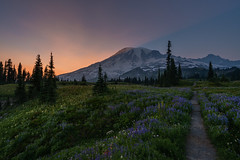 DSC03752_hdrs (www.mikereidphotography.com) Tags: rainier wildflowers lupine landscape northwest zeiss sunset sunrise