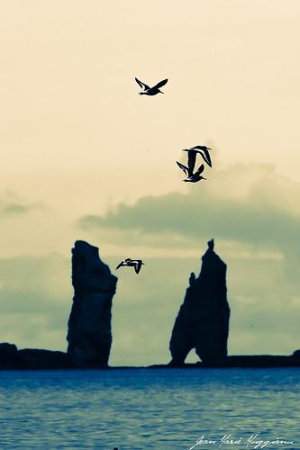 Les huîtriers-pie, le géant et la sorcière
