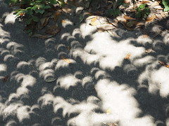 082117eclipse-08 (djfnola) Tags: davidfischer olympus em10 mzuiko1240mm28pro eclipse neworleans la louisiana fsj faubourgstjohn crescents shade pinholecameraeffect