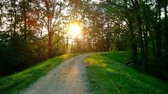 gravel sun sunshine trees grass branches sticks rocks... (Photo: Paweł Kuflowski on Flickr)
