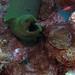 Bonaire 08.08.2017 - 022 green moray