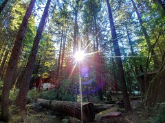 Sun-star. (thnewblack) Tags: lgg6 lg g6 android smartphone cameraphone outdoors nature hdr britishcolumbia rolleylake forest woods wideangle sunflare 13mp