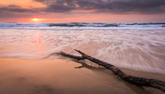 Morning Breaks (inkasinclair) Tags: peregian beach sunrise clouds cloud sea ocean waves drift wood log timber sand wave water queensland australia sunshine coast sunny sun horizon high tide golden light landscape nature travel photography nikon d810