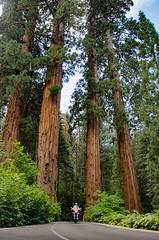 Sequoia Highway Road (365 Diaz Nikon Photography) Tags: sequoia