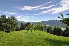 Niederösterreich Mostviertel Göstling Ybbs_DSC0624 (reinhard_srb) Tags: niederösterreich mostviertel göstling ybbs urlaub ferien freizeit bio bauernhof bergbauern fernsicht steilhang wiese weide bäume sonnenschein wald