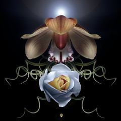 Cymbidium, Rose & Tillandsia (Pixel Fusion) Tags: cymbidium orchid rose tillandsia flower flora nature macro nikon d7000
