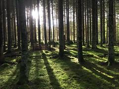 Skog i motljus (Göran Nyholm) Tags: