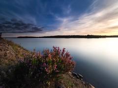 Signs of summer getting overdue (Jarno Nurminen) Tags: seascape finland espoo kivenlahti longexposure nisi cliff sea shore olympusinspired olympus autumn calluna heather