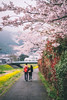 You&Me (kiatthaworn khorthawornwong) Tags: love couple street fujifilm fujinon xpro2 travel japan japanese sakura cherry blossom pink flower autumn bloom beautiful beauty flickr asia bokeh blur
