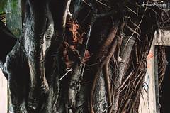 Hanging Around (souravmondal786) Tags: calcuttaphotography calcuttawalk calcuttaphotowalks calcuttastreetphotography calcuttastreet calcuttawalks streetphotography streetart streetsofkolkata street streetwork god goddess treat streetsceen india idol
