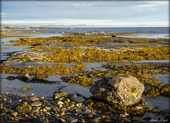Rivage (josboyer) Tags: rivage pointedesmonts eau beach ocean landscape