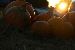 October sunset (cynthiarobb) Tags: