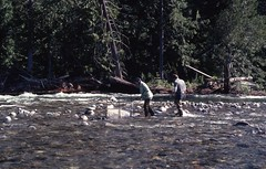 1976. Collecting aquatic insect drift samples. Nason Creek. Western spruce budworm control project. Okanogan-Wenatchee National Forest, Washington. (USDA Forest Service) Tags: usda usfs forestservice foresthealthprotection region6 r6 stateandprivateforestry forestinsect forestentomology westernsprucebudworm 1976 waterquality monitoring stream aquaticinsects aerialspray effects controlproject driftsample nasoncreek okanoganwenatcheenationalforest horn