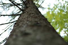 IMG_1086 (bia93snow) Tags: tree baum nature