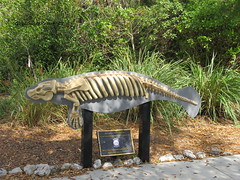 Model of a Manatee Skeleton (Gerald (Wayne) Prout) Tags: model manatee skeleton manateepark cityoffortmyers leecounty florida usa prout geraldwayneprout canon canonpowershotsx60hs powershot sx60 park conservation preservation nature wildlife teaching learning photographed photography fortmyers lee county westcoastinlandnavigationdistrict wcind replica manateeskeleton discoverleecounty