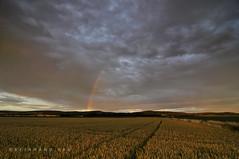 Niederösterreich Weinviertel Harmannsdorf_DSC1083AT (reinhard_srb) Tags: niederösterreich weinviertel harmannsdorf regenbogen kornfeld seebarn wald himmel stimmung wolken abendrot