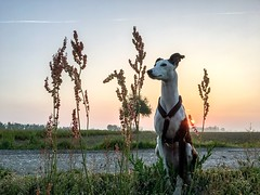 Domestic Animals Mammal Animal Themes Nature Sky Outdoors No People Water Beauty In Nature Tree Grass Portrait Pet Portraits EyeEmNewHere The Week On EyeEm Sitting Sunrise Whippet Daylight Adorable Friendship Day Growth Landscape Scenics (Michail Paschalidis) Tags: domesticanimals mammal animalthemes nature sky outdoors nopeople water beautyinnature tree grass portrait petportraits eyeemnewhere theweekoneyeem sitting sunrise whippet daylight adorable friendship day growth landscape scenics