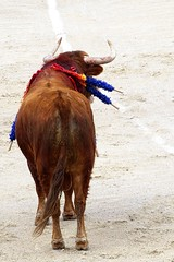 Esplendido - Garcia Jimenez (aficion2012) Tags: arles france francia corrida bull fight toros toro arène garcia jimenez taureau taureaux esplendido