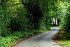 Lebensweg (grafenhans) Tags: sony alpha 55 a55 alpha55 minolta af 1750 weg kurven wald waldweg grafenwald bottrop nrw