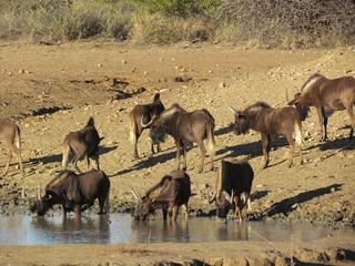 Namibia Luxury Hunting Safari 63
