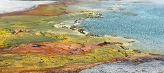 Grand Prismatic Spring (robmcrorie) Tags: grand prismatic spring yellowstone park wyoming geothermal extremophile bacteria iphone 7 plus