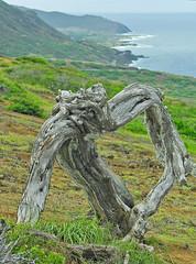 gnarly (nj dodge) Tags: paioluolupoint hanaumabay sandybeach driftwood hiking trail crater oahu hawaii