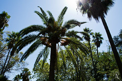 Mallorca in August (lostinavision) Tags: majorca mallorca spain summer hot august sunny green beautiful sharp contrast palma palm trees visiting travelling alfabia jardines