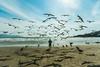 Encantador de aves (Zé Luiz Dias) Tags: verde garopaba canon efs1022mm praia santacatarina brasil mar canonphotos américalatina gaivota urubu pescadores