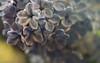 Cumulonimbus (akigabo) Tags: montreal nature flora dof color closeup macro flower canon t5i 100mm 7dwf akigabo