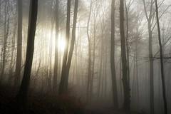 BeautifulTristesse (BphotoR) Tags: bphotor forest fog december winter sun sunset