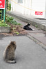 Ogimachi cats (yukilanieve) Tags: ogimachi kawasaki cat animal 猫 鶴見線
