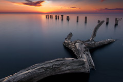 Fifty Point (angie_1964) Tags: fifty point lakeontario sunrise sky water nature landscape seascape branch nikond800e