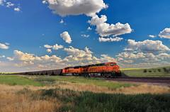 Burlington Northern & Santa Fe Coal Train (nelhiebelv) Tags: