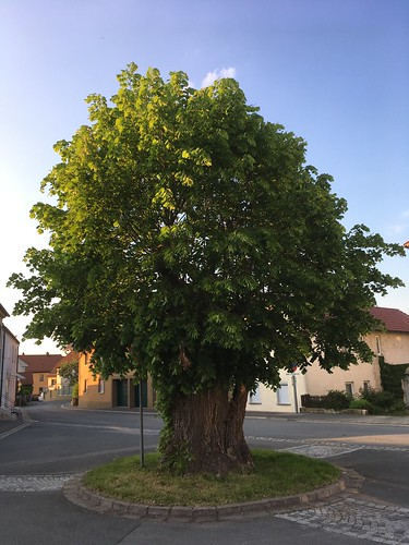 Kastanienbaum
