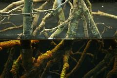 Wood in the water (JoãoGuerreiro666) Tags: wood roots water nausicaa nordpasdecalais pasdecalais france boulognesurmer