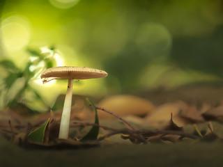 Mushrooms grow up