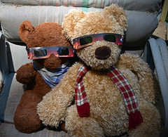 Eclipse Bears (BKHagar *Kim*) Tags: bkhagar bear bears htbt eclipse glasses eclipseglasses animals stuffed toys outdoor teddy larry teddybear teddybears