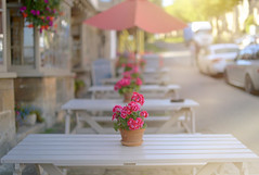 Summers End.. (KissThePixel) Tags: autumn summer summerlight evening light geranium pink geraniums landscape bokeh macro nikondf sigma 50mm 14 f14 sigmaf14 streetphotography pub table cotswolds burford oxfordshire beauty flower flowers