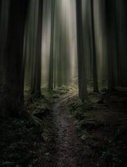 Alpine Forest (ScottSimPhotography) Tags: forest alpine moody swiss scottsimphotography sony switzerland alps berneseoberland trail walk path trees a6000 dramatic