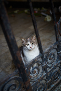Cat seated behind grid, Tangier, Morocco