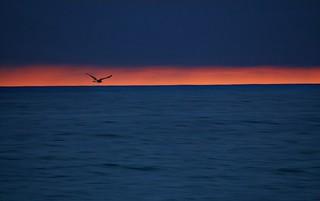 Orange Blue Sea