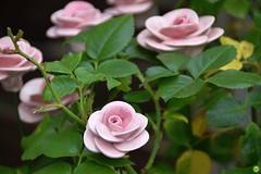 Eternal flowers (petrOlly) Tags: europe europa germany deutschland pottery toepfermarkt moenchengladbach rheydt schlossrheydt schloss handmade object objects flower flowers