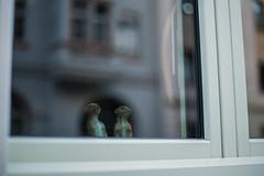 Séjour à Dresde (theodirector) Tags: dresden dresde allemagne germany deutschland streetphoto streetphotography window windows looking voyeurism voyeur meerkats meerkat lookingoutside reflexion reflect timon toys two couple figurine suricate funny cute home figure friends fenster neustadt fenetre fenêtre