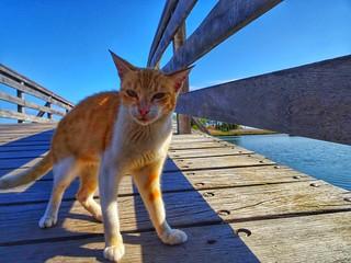 The guard of the bridge..wooden bridge in vistonida lake..Porto Lagos Xanthi Greece