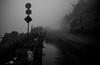 foggy pass (N.sino) Tags: m9 ultron35mmf17 fog pass shibutouge nagano mtyokote 渋峠 霧 横手山 長野 志賀高原 道路標識