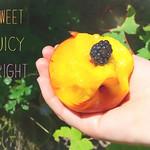 Pfirsich und Brombeere thumbnail
