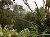 September's Morning Mist (amanda.parker377) Tags: cobwebs webs morningfog autumnal leaves passionflower honeysuckle lonicera seasons garden